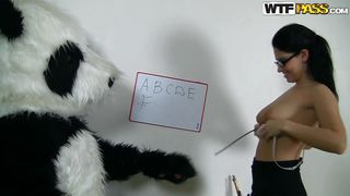 panda bear likes his teacher