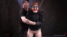 creamy ginger is isolated and restrained