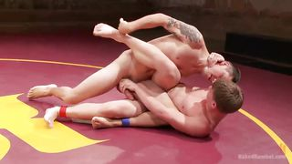 Two Studs Fighting For Supremacy